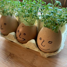 Family of cress heads