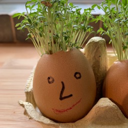 How to grow cress heads with children