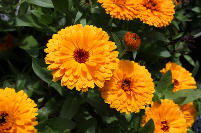 Marigold - growing with children