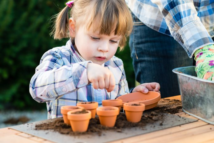 Child sowing seed with a small pot kit
