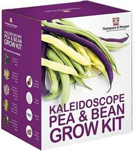Kaleidoscope Pea and Bean Seed Growing Kit