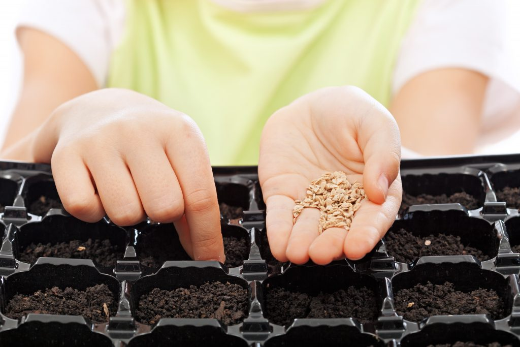 Child sowing seeds into germination tray