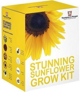 Stunning Sunflower Seed Growing Kit