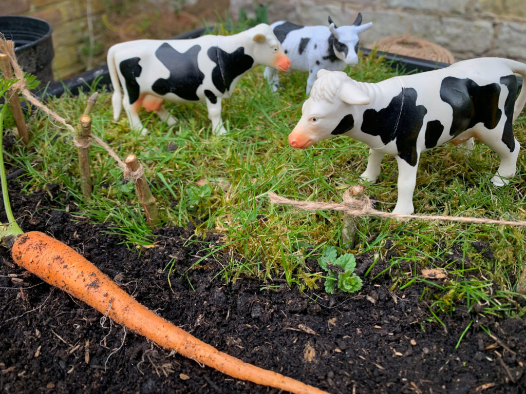Cows in a miniature farm
